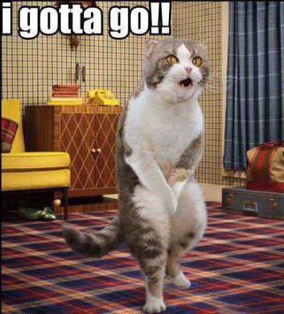 cat gotta go