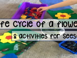 Life Cycle of a Flower – Activities & Seesaw Freebies